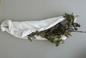 Laurus nobilis, gesso, stoffa, rami di alloro